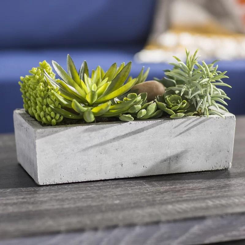 Floor Succulent Plant in Concrete Planter