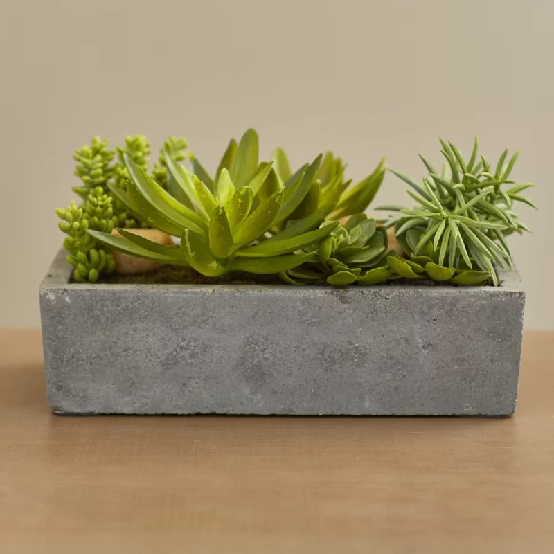 Decorative Succulent Pots