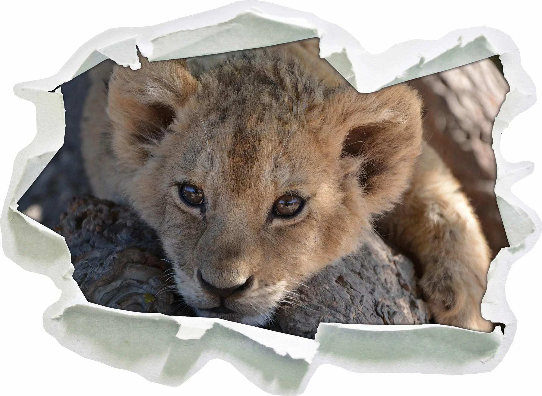 East Urban Home Cute Tiger Cub Wall Sticker Wayfair Co Uk