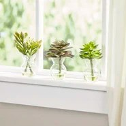 Faux Succulents in Glass Vases (Set of 3)