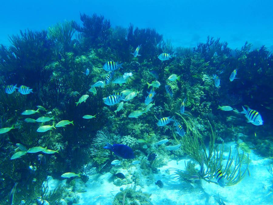 Catamaran, Reef and Kittiwake Snorkel Sail Port Adventure With Disney Cruise Line