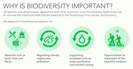 Image result for importance of biological diversity
