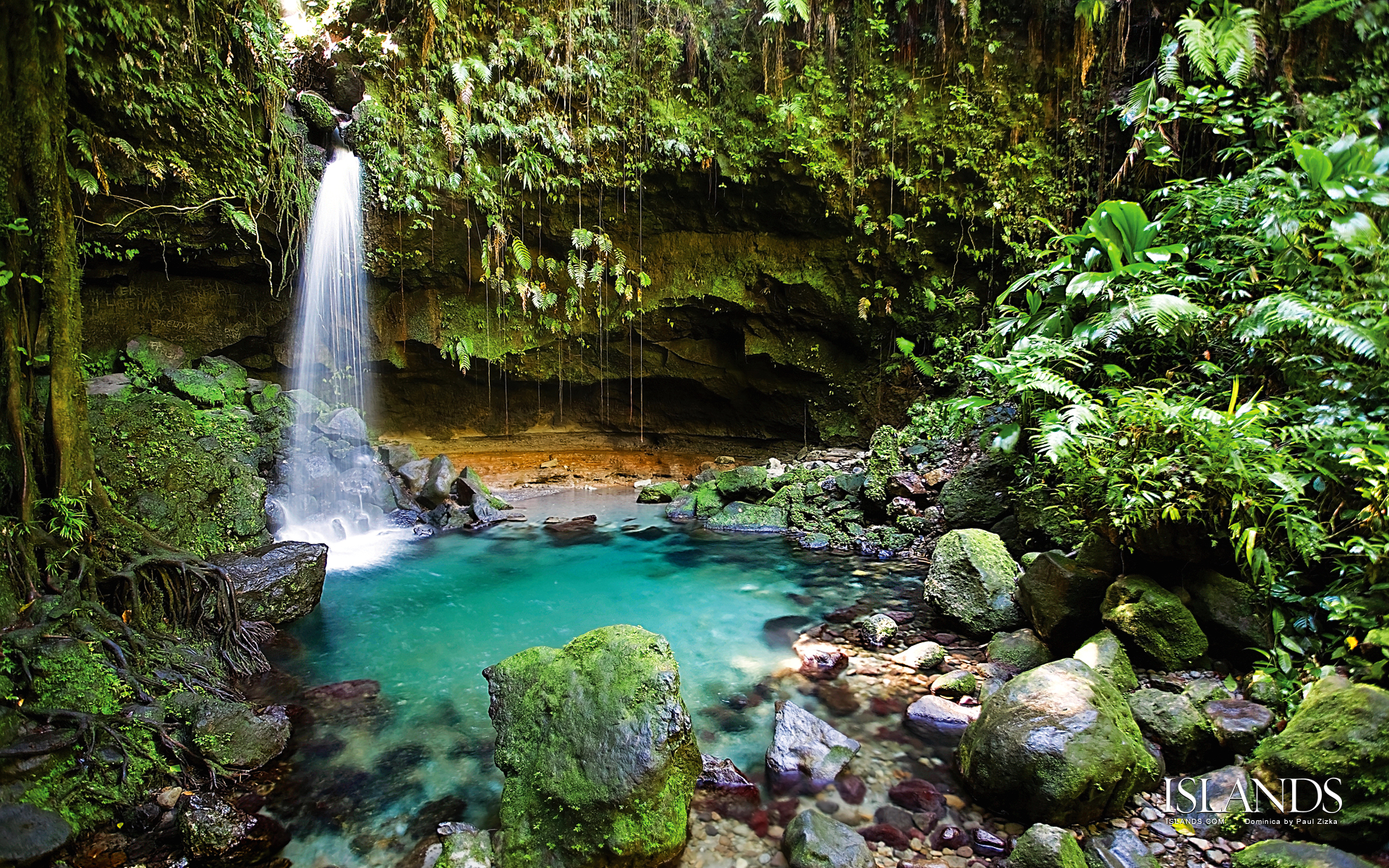 *free* shipping on qualifying offers. South American Tropical Rainforests