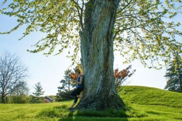 a woman stands in the shade of a giant tree