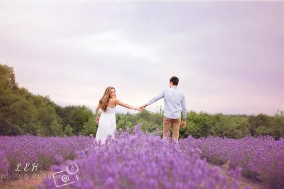 Lavender Farm - Massachusetts