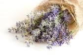 lavender7