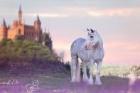 Jazzy our Unicorn is available to rent