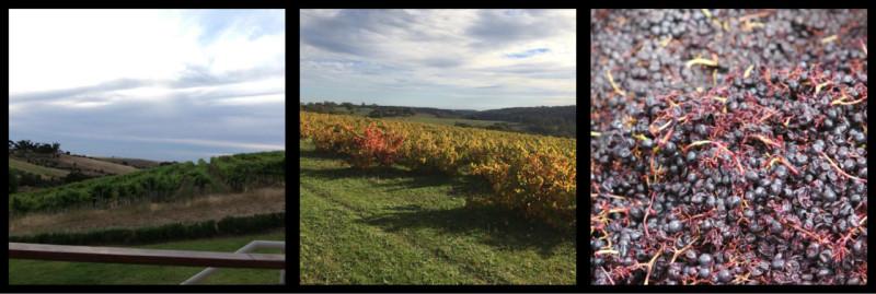 McLaren Vale Wine Region