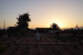 WWOOFING IN EGYPT