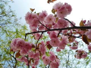 angela-carson-beijing-blog-spring-flowers-in-bloom-1