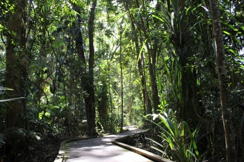 The Jumrum walking path through the lush Kuranda rainforest
