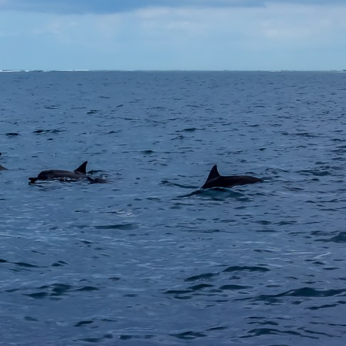 Swimming with dolphins on Mauritius - Jetsetting Fools