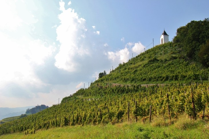 Path through vineyards to Chapel on Pyramid Hill, Piramida, in Maribor, Slovenia