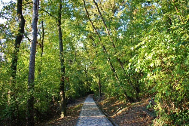 Shaded walking path on Avala Mountain to Avala Tower, Belgrade, Serbia