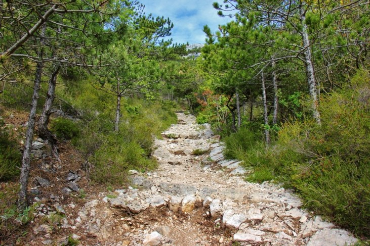 Rocky, uphill trail through evergreens while hiking Vidova Gora on on Brac, Croatia
