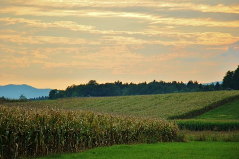 Sunset over corn fields at Big Berry Glamping Resort, Bela Krajina, Slovenia