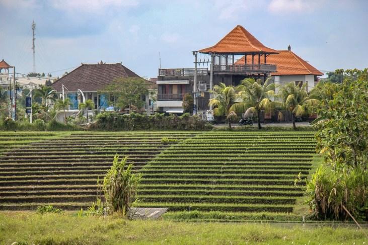 Terraced rice fields in Canggu, Bali, Indonesia