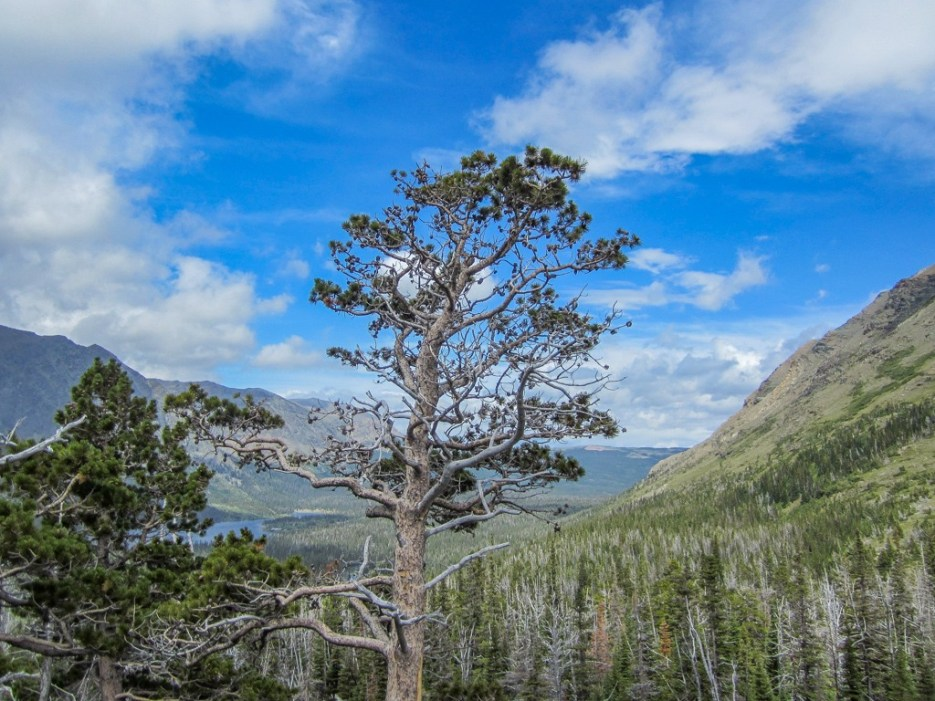 View from Aster Park Overlook, Glacier National Park, Montana