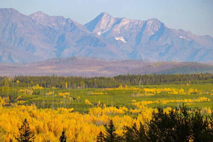 If you hit the road at the right time of year you catch Fall Colors, Montana Road Trip