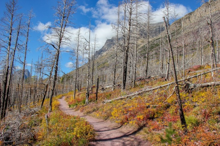 Winding along the Trail To St Mary Falls, Glacier National Park, Montana