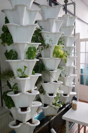 FARM:shop - East London Urban Farming Hub