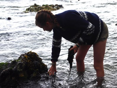 seaweed harvesting course broughgammon north coast seaweed course x