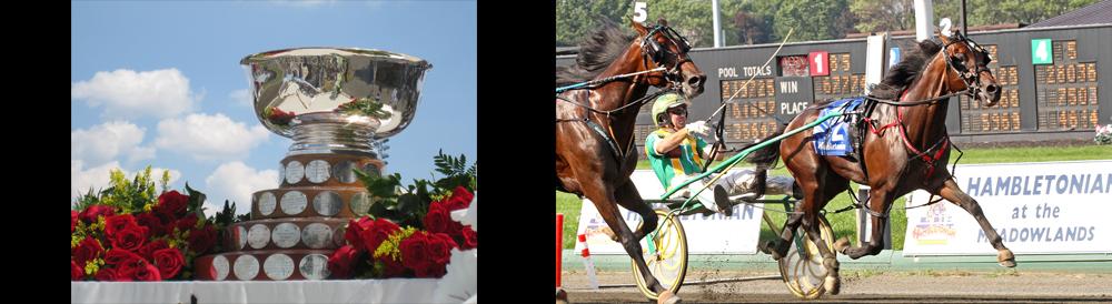 Race Horse Header - Hambo Trophy