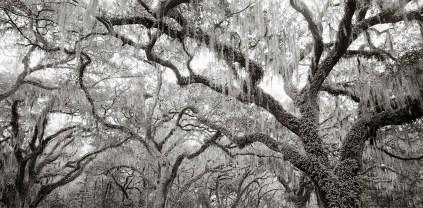 Veiled Forest