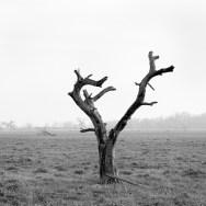 Tree Study No.3