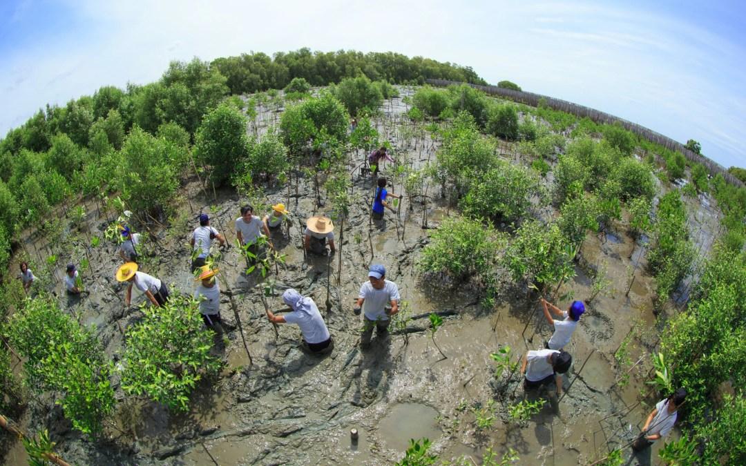 Environmental Peacebuilding – A Quick Look at Leading Organizations