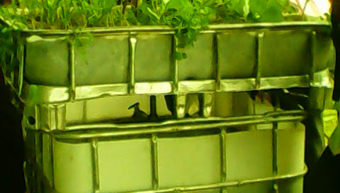 Aquaponics Farming - Water Governance Institute