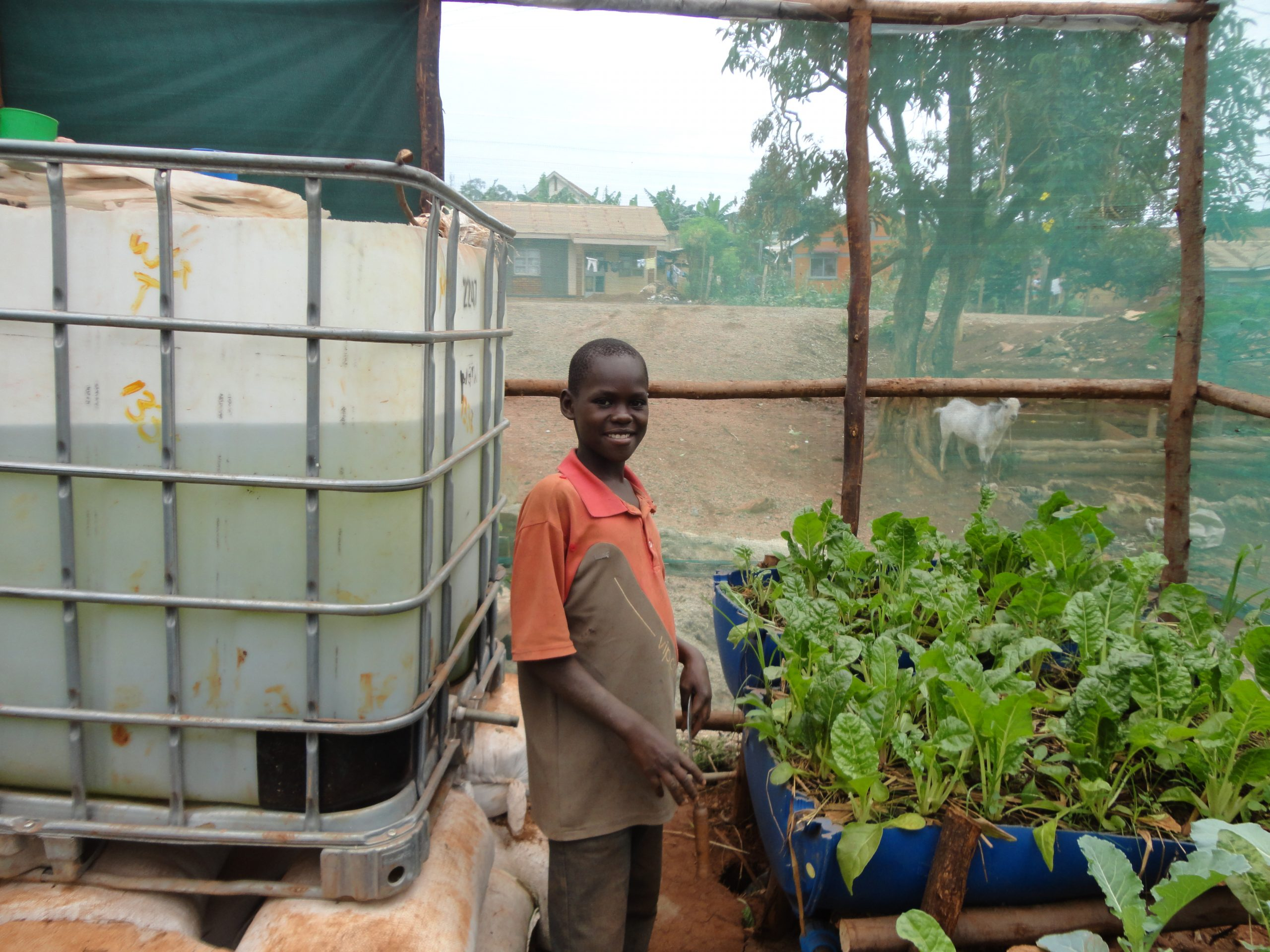 refugees seek economic inclusion by growing crops via aquaponics with WGI