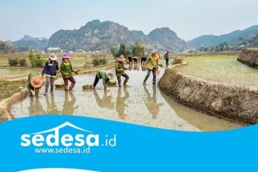 Meningkatkan Perekonomian Desa Dengan BUMDes