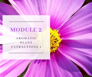 Certificate in Holistic Aromatherapy Module 2
