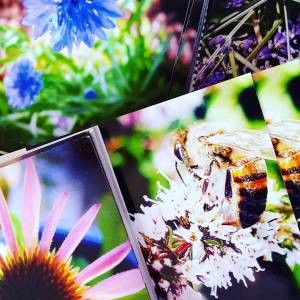 Aromatic Note cards from the Garden