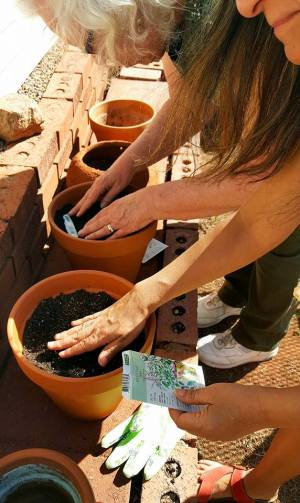Plant-an-aromatic-herb Pot