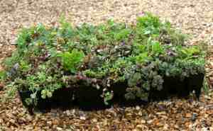 We are suppliers of Green Roof Systems based in Wiltshire UK.