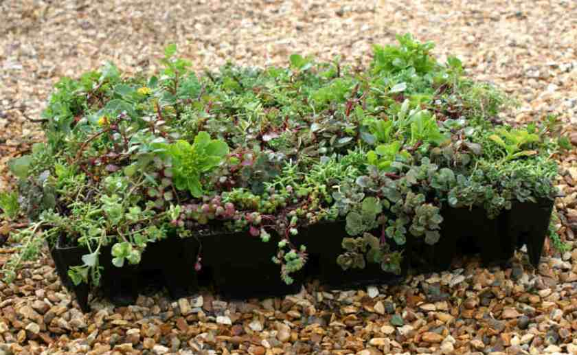 S.pod_sedum tray or modular system ready for a Green Roof