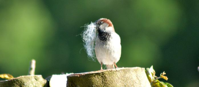 bird On Sedum Green Roof Fields