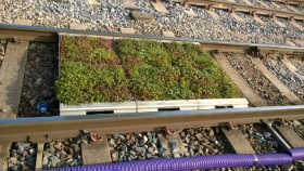 Manchester_Tram project Sedum S.Pods or modular trays ready to lay