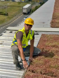 Sutton_Sedum_Green_Roof