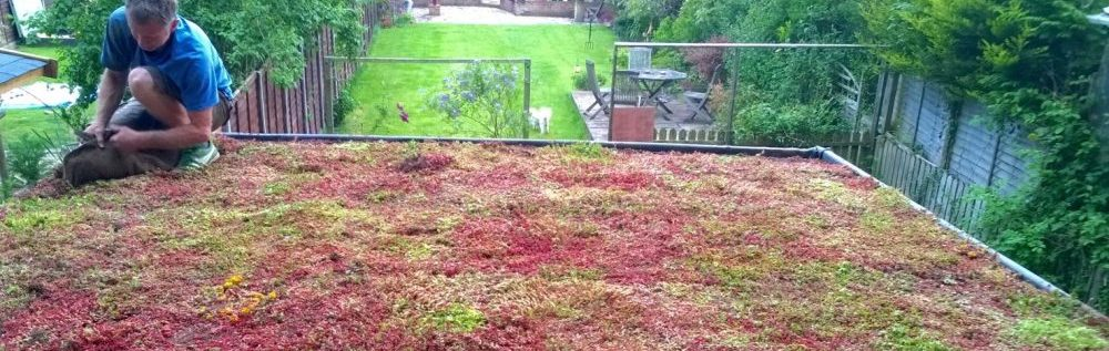 How To Install A Green Roof Sedum Green Roof