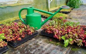 Sedum Green Roof Installation Services