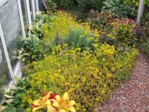 Hardy garden succulents make a great border