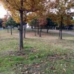 ロケ地、公園画像例 大阪