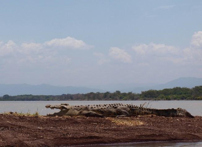Nechisar Crocodile