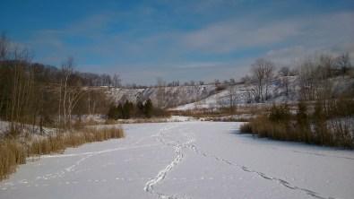Tracks across the quarry ponds at the Brickworks. January 31st 2015