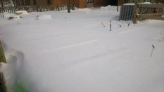 I love that you can see the garden beds through the snow! February 3rd 2015