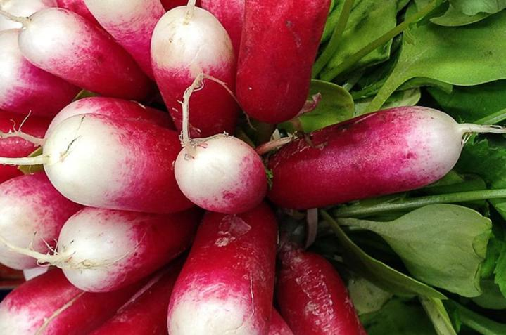 Radish French Breakfast Seeds 10 Grams - Wholesome Supplies