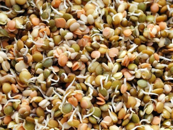 Lentil Sprouting Mix